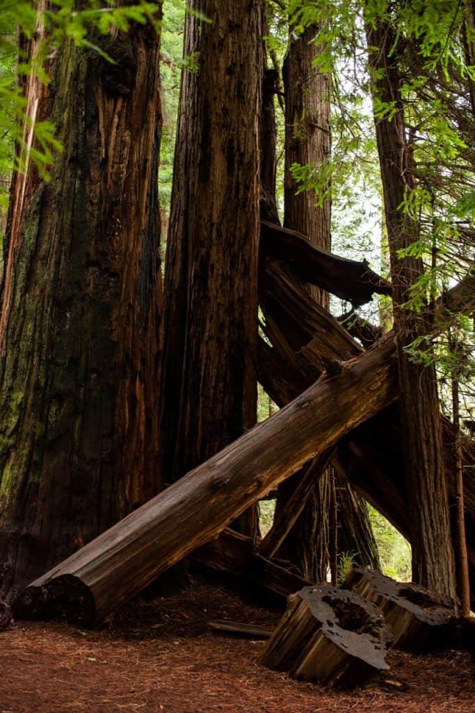 Jedediah Smith Redwoods State Park Stout Grove