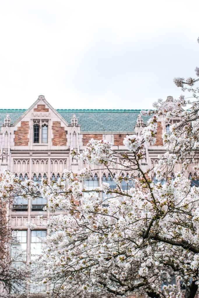 UW Cherry Blossoms | Free and Cheap things to do in Seattle