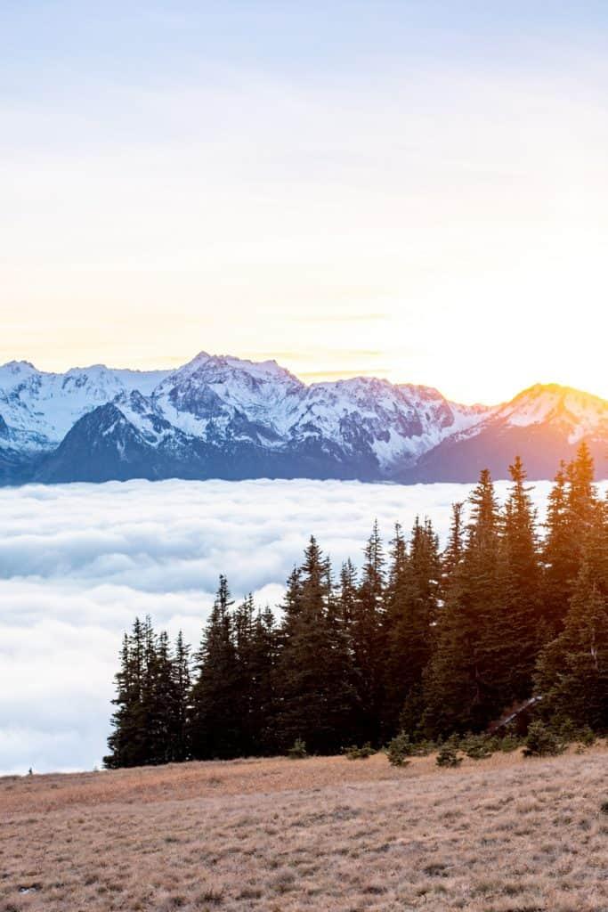 Olympic Peninsula Hurricane Ridge | Free and Cheap things to do in Seattle