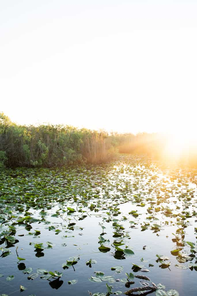 Anhinga Trail | Things to do in the Everglades
