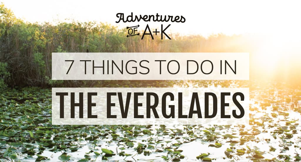 7 Things to do in the Everglades