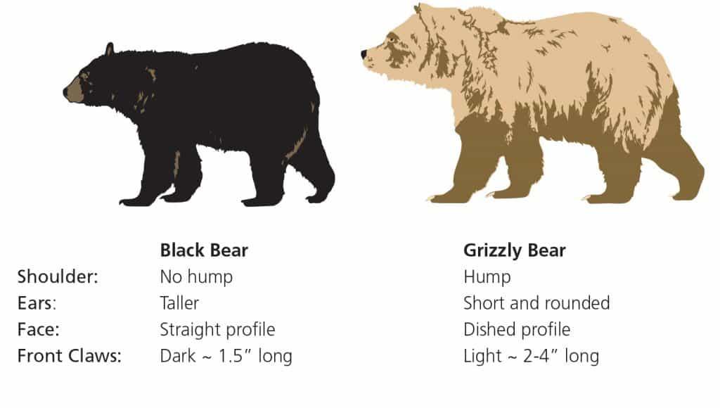 Bears Glacier