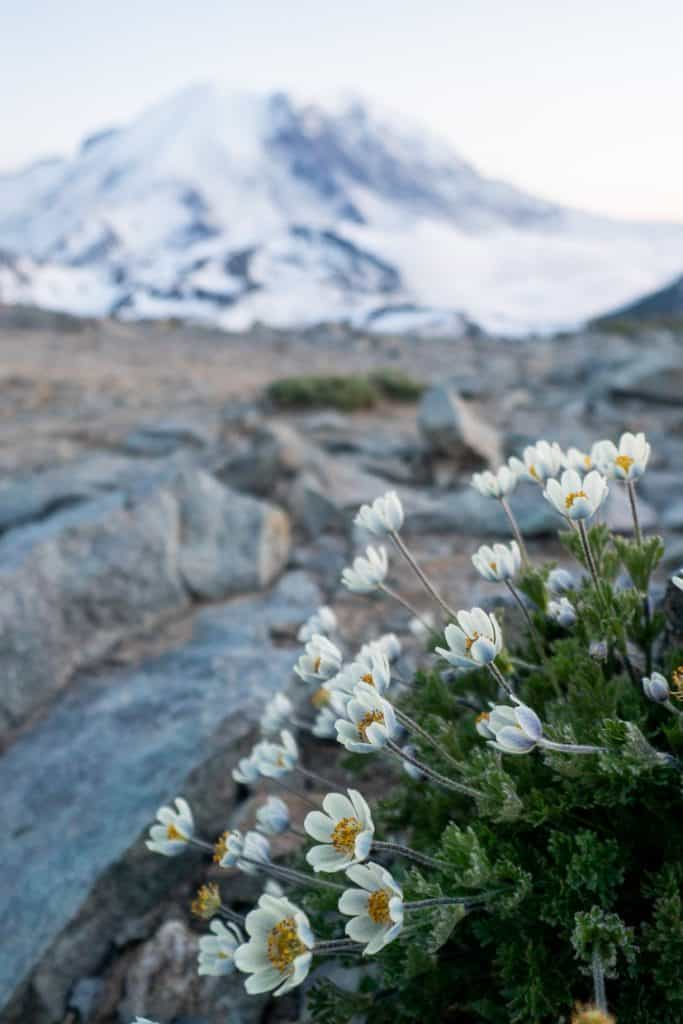 Hiking the Mount Fremont Lookout Trail at Mount Rainier