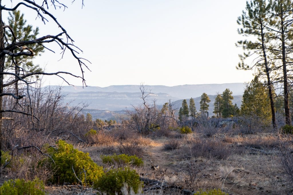 Observation Point East Mesa trail views