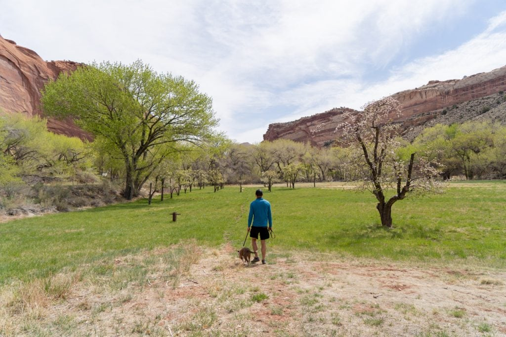 Fruita Orchards Capitol Reef National Park